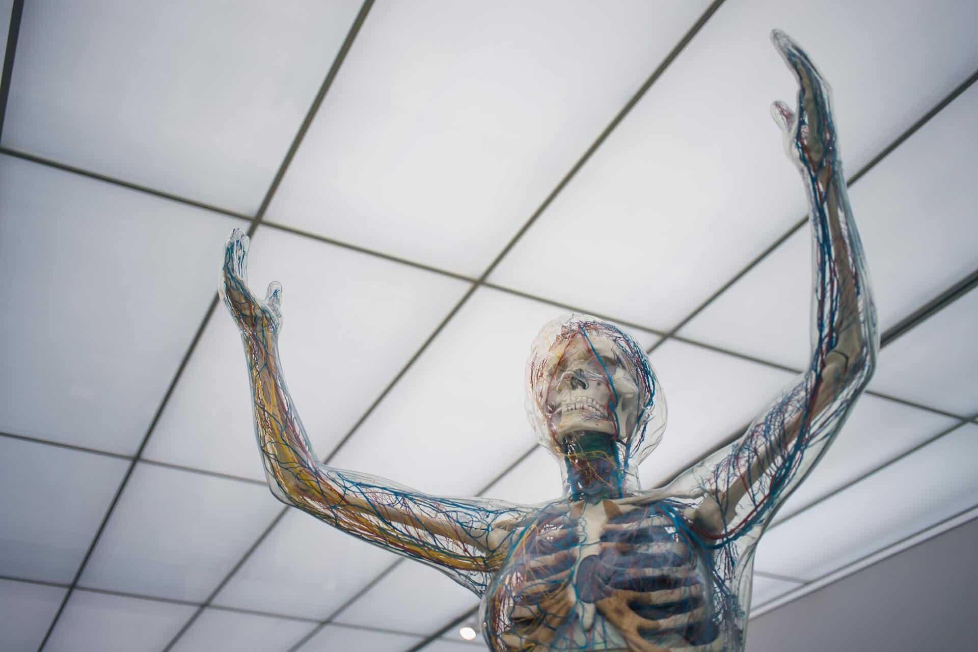 Anatomielehrer