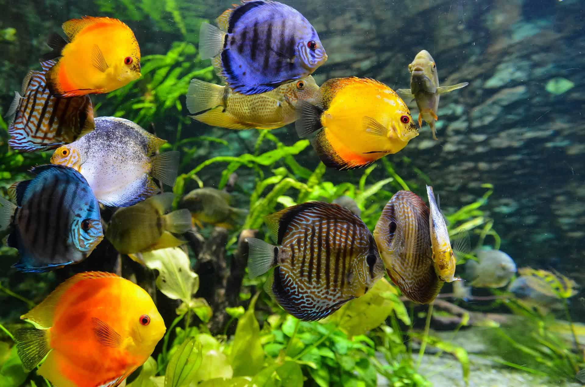Aquarium Spezialist